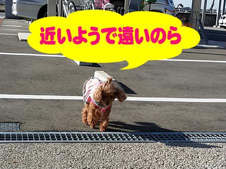 5_20141121215216031.jpg