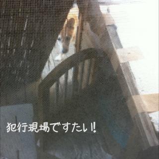 moblog_006c71e6.jpg
