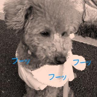 moblog_09673ba1.jpg