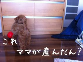 moblog_36386cbc.jpg