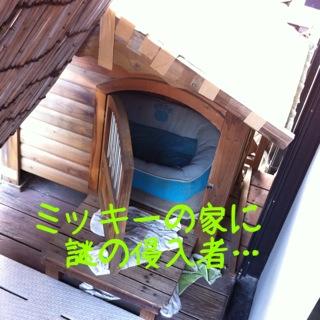 moblog_4b13e7c1.jpg