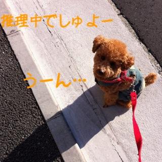moblog_5a03bd44.jpg