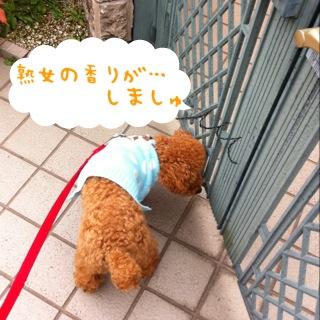 moblog_8699b514.jpg