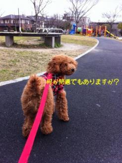 moblog_926e392b.jpg