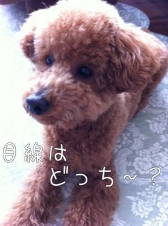 moblog_dbd1d6ac.jpg