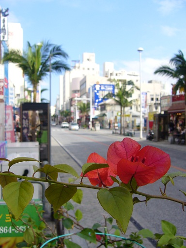 沖縄旅行 221