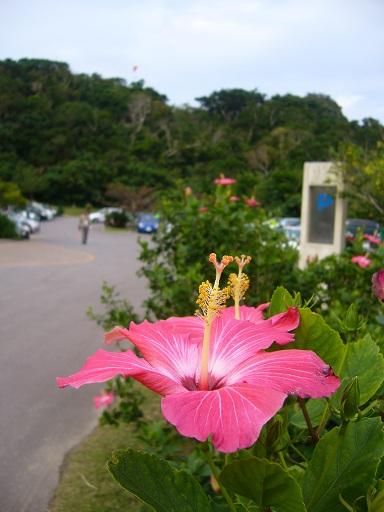 沖縄旅行 257