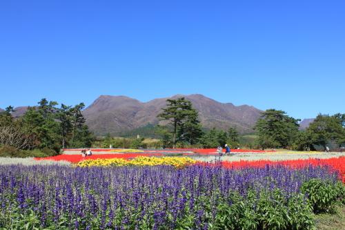 お花畑越しに見える久住山