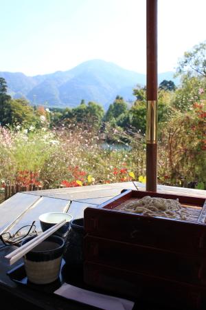 蕎麦とコスモス越しの金鱗湖