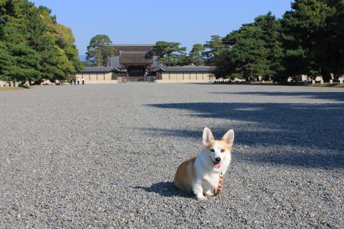 京都御苑で朝のお散歩~♪