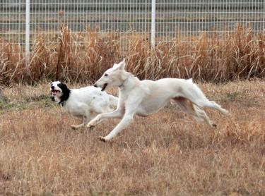 狩猟犬コンビ