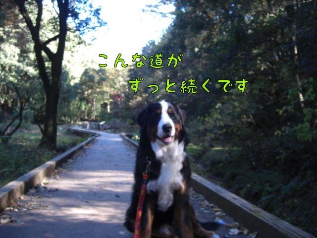 CIMG5694.jpg