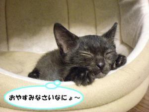おやすみ黒