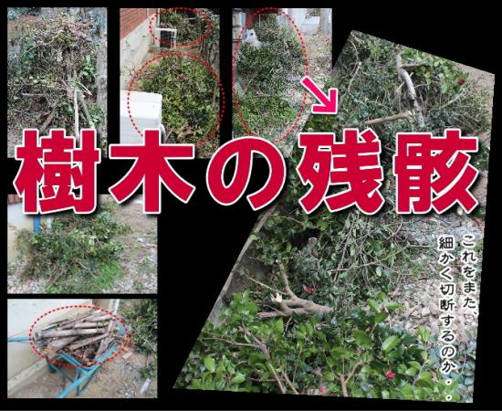 樹木の残骸