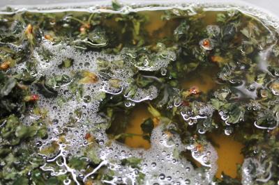 ノバラ 天恵緑汁