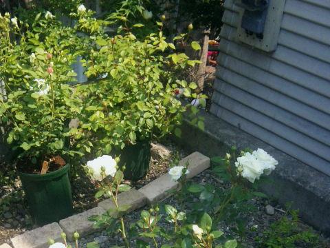 駐車場花壇1