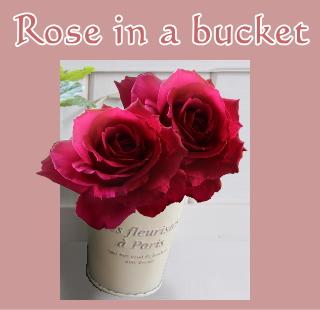 ミニバケツに薔薇