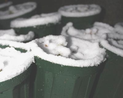 雪に埋もれるクリスマスローズ