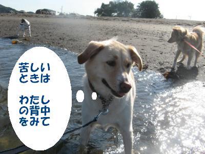 7552_convert_20110927221736.jpg