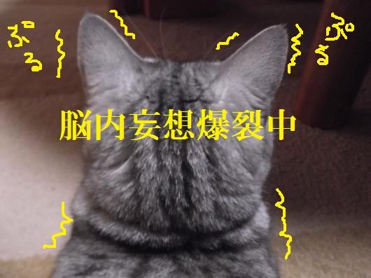 DSCF7713_convert_20120116205418_20121221173326.jpg