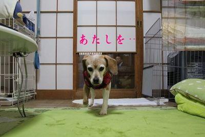 ai-20121218-oheya02.jpg