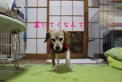 ai-20121218-oheya03.jpg