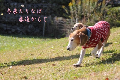 friai-20121109-fujiharness10.jpg
