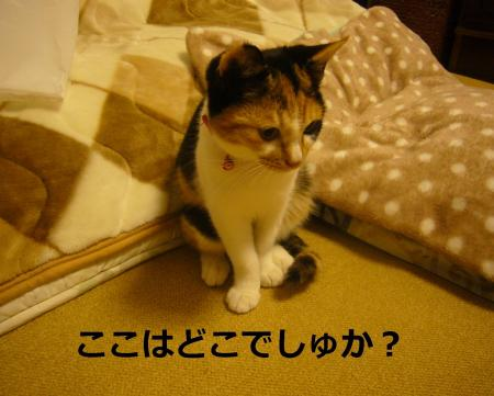 P1030924_convert_20141117102718.jpg