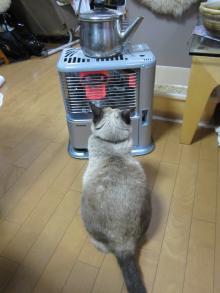熱くない?