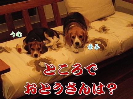 20110926_09.jpg