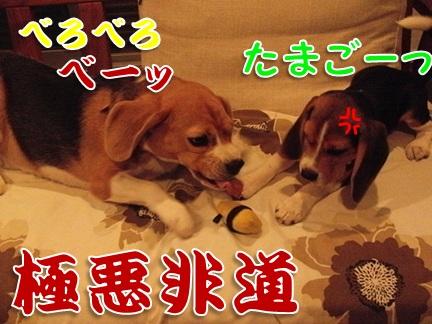 20111005_04.jpg