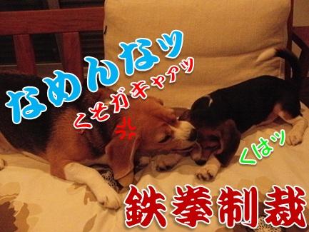 20111005_07.jpg