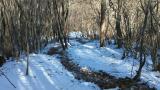 雪の中のトレイル