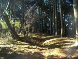 樹林帯の中を走る