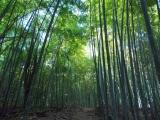 竹林の中間を走る