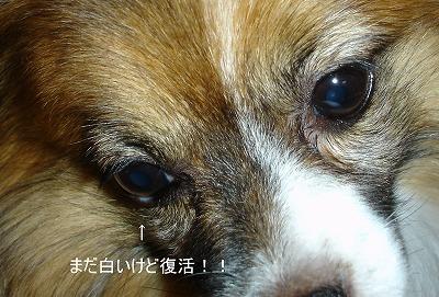 s-DSC04391.jpg