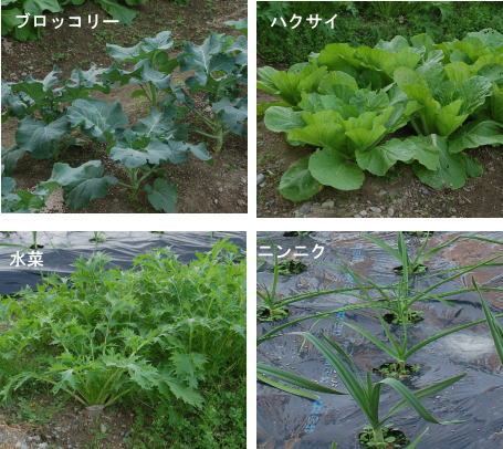 ブロ・白菜・水菜・ニンニク