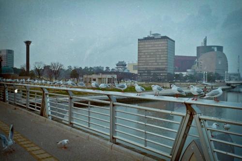 PICT0004_20120206203953.jpg