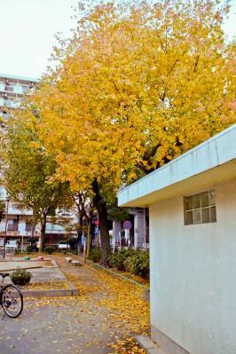 PICT0009_20111204200749.jpg