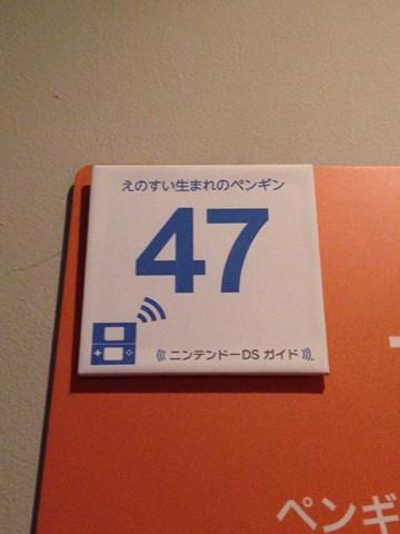 江ノ島水族館 (50) (コピー)