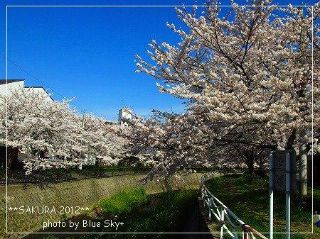 守恒桜並木2