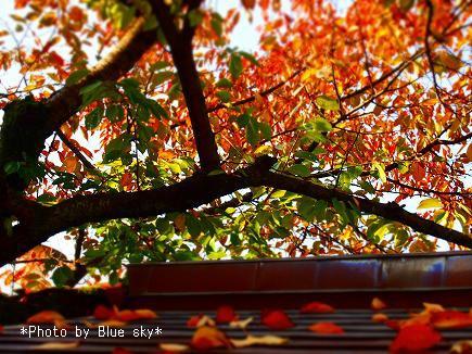 伏見稲荷紅葉