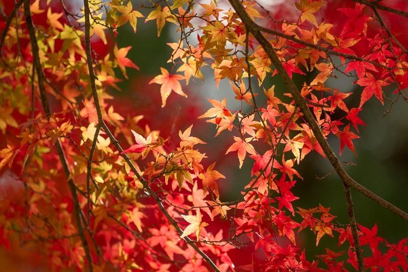 ppwllezzzxc236_0091.jpg