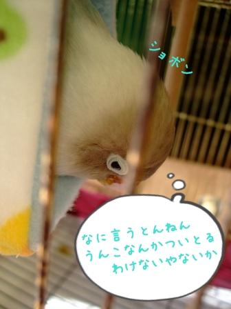 001_20111227093240.jpg