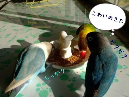001_20111230191737.jpg