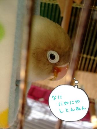 002_20111227093242.jpg