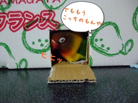 015_20111130101012.jpg