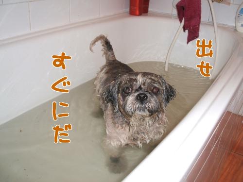 にんにく風呂