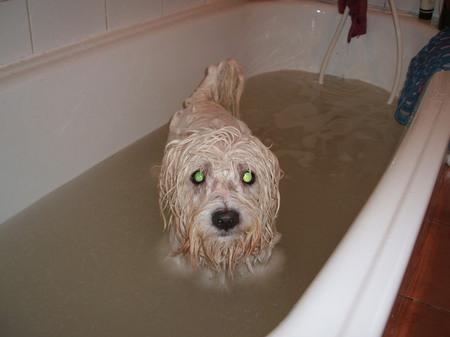 ボガートお風呂