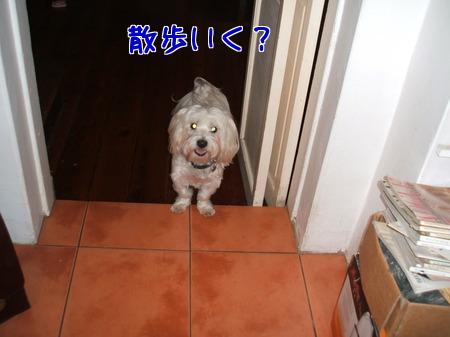 散歩いく?